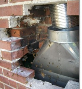 Bees in Chimney Cavity